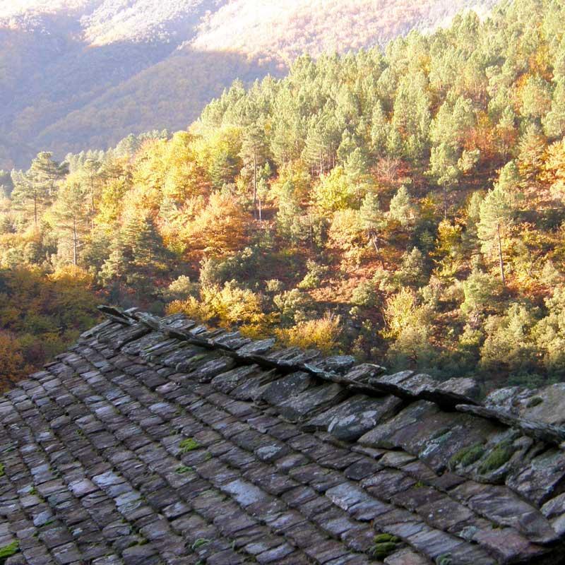 toits-lauzes-automne copie