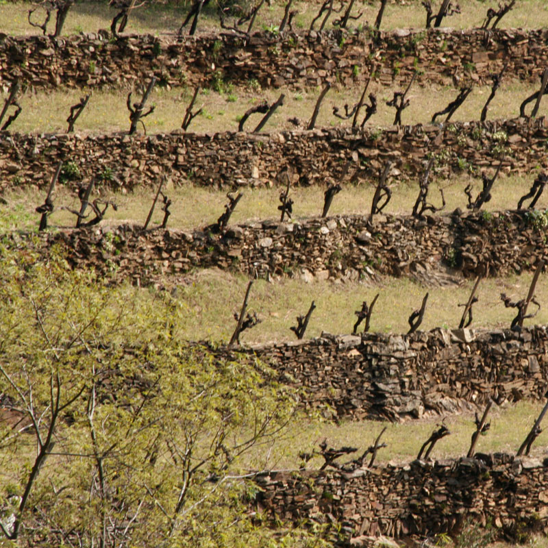 photo-vigne-vin-5